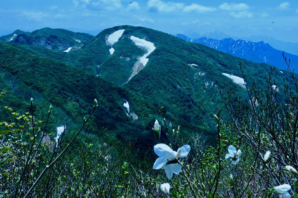 タムシバと面白雪渓!?