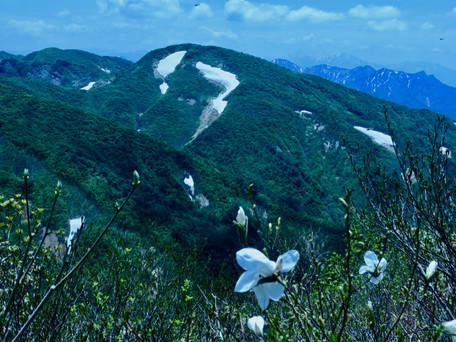 ヒメサユリの浅草岳へ 2019/06/26
