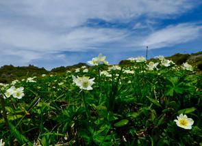北海道・トムラウシ山 2017.07/03