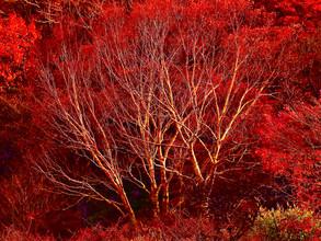 赤城山へちょっと紅葉ドライブ 2020/10/27