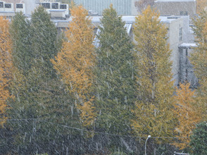 東京都心で初雪! 2016.11/24