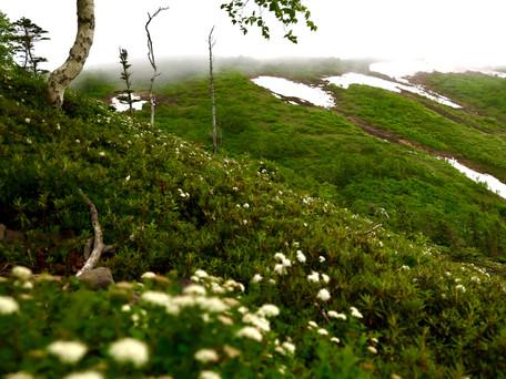 北海道・表大雪高原沼巡り 2021/07/05〜06