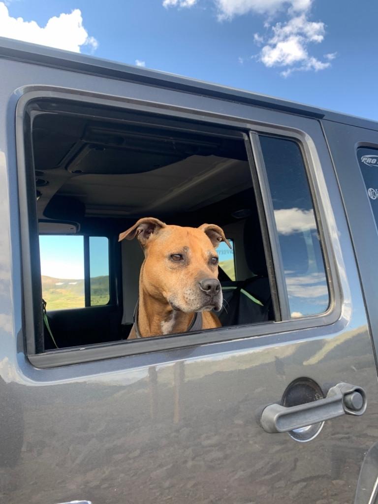 Jeep Dog