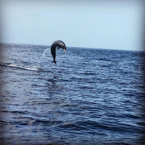 dauphins 6