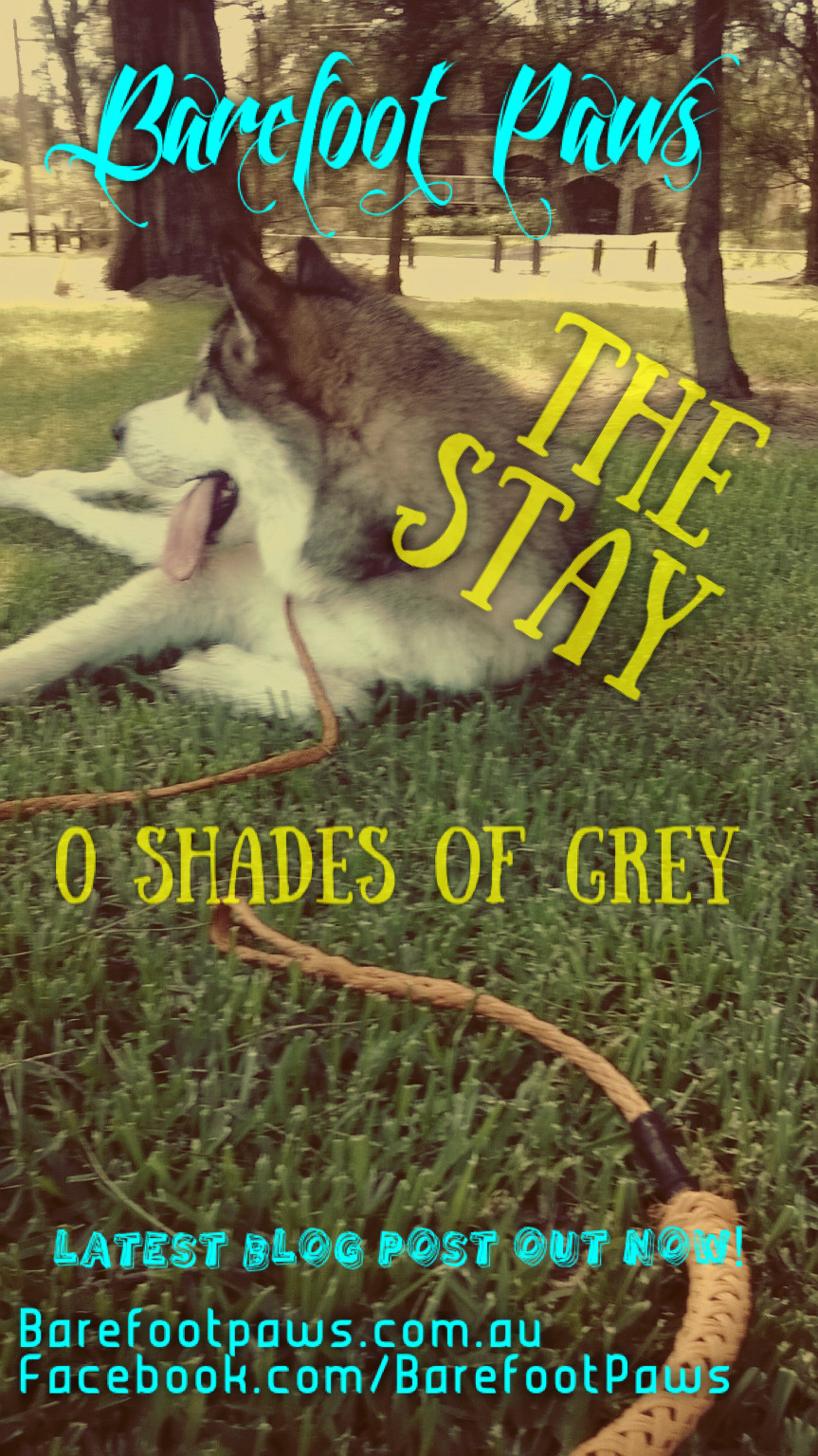The_Stay
