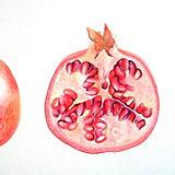Hawthorn, Botanical Illustration