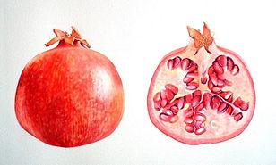 db_pomegranate1.jpg
