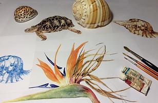 natural history illustrations.png