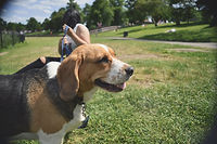 Dog in the Parkl