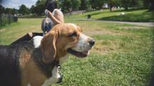 Βόλτα = Η μεγαλύτερη ανάγκη του σκύλου!