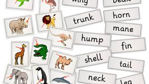 flashcards und wordcards zum Thema animal body parts'