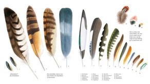 Natur-Verlag Wawra – Materialien zum Entdecken der heimischen Natur