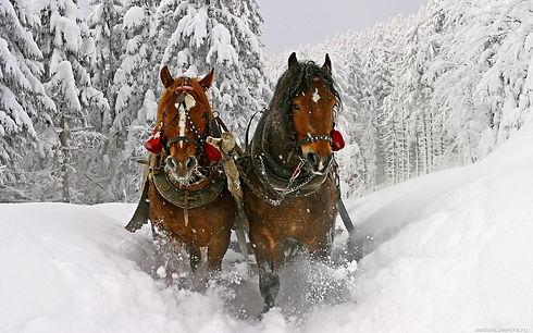 horse-wallpaper-1440x900-002.jpg