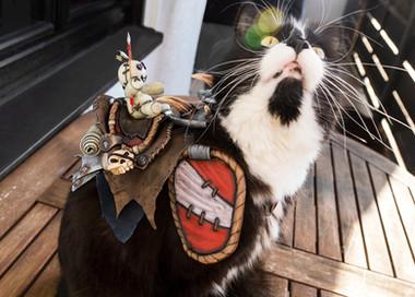 Vicious War Cat (WoW)