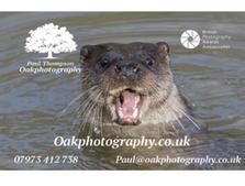 Oak Photography