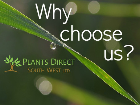 Why choose Plants Direct South West?