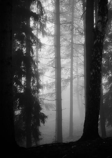 Winter_b&w_7.jpg
