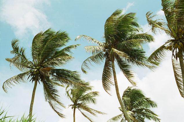Palmtrees_srilanka.jpg
