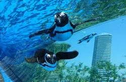 12月7日 土曜日先生たちと一緒に水族館へ行こう♡