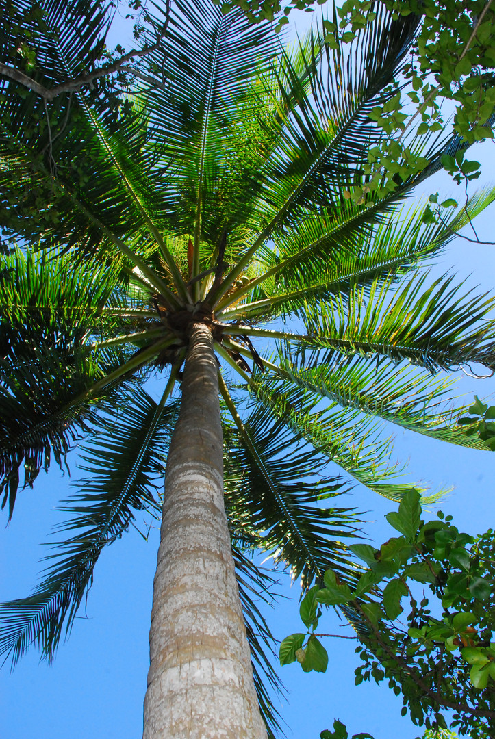 Palm Perspective