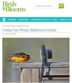 2013 06 21 birds in bloom