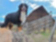 Best Dog Groomer in Steamboat Springs, Quality pet grooming
