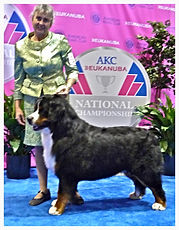 Eukanuba AKC National Championship Dog Show 2013, Best dog groomer in Steamboat Springs, Best Pet groomer in town Steamboat Springs