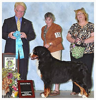 Best dog groomer in Steamboat Springs, Best Pet groomer in town Steamboat Springs, Award of Merit BMDCR 2013 Regional Specialty