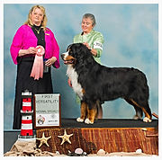 First place Versatility Dog, Best dog groomer in Steamboat Springs, Best Pet groomer in town Steamboat Springs