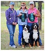 Best dog groomer in Steamboat Springs, Best Pet groomer in town Steamboat Springs, Bernese Mountain Dog Brace Draft team BNDD title