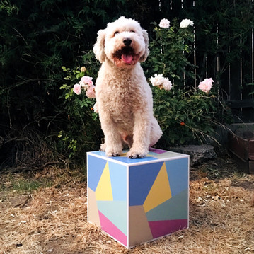 Kevin on a cube..jpg