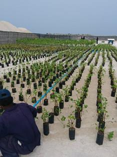 Planting Trees.JPG