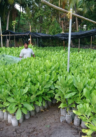Picture our Alba Maldives Nursery.JPG