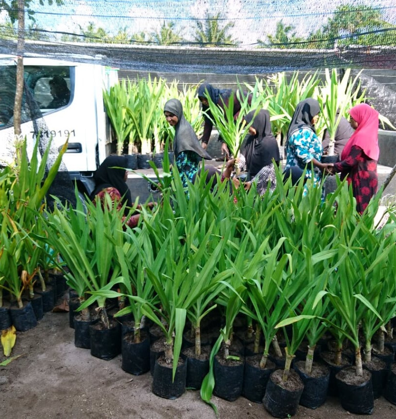 Moving plants in Maldives.JPG