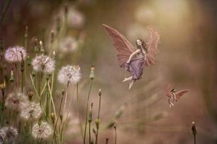 Dandelion Fairies .jpg