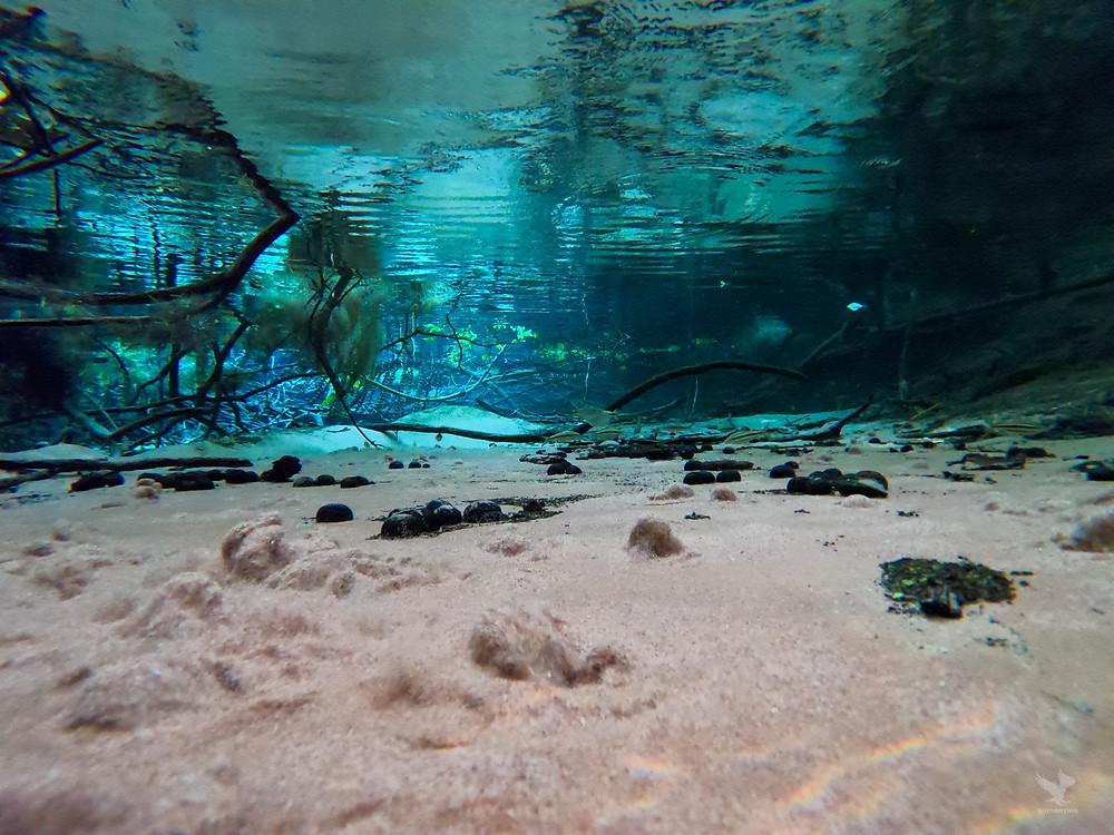 Flutuação em Nobre MT com águas cristalinas e ressurgências