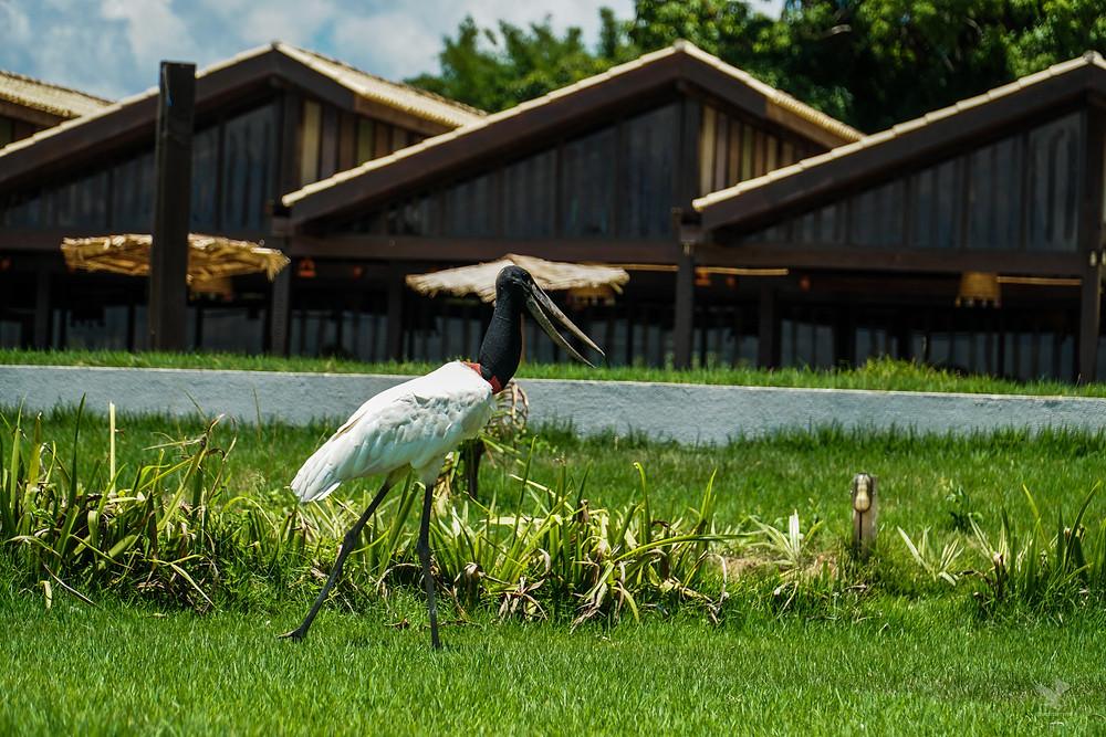 Pantanal Tuiuiús Hotel Santa Rosa