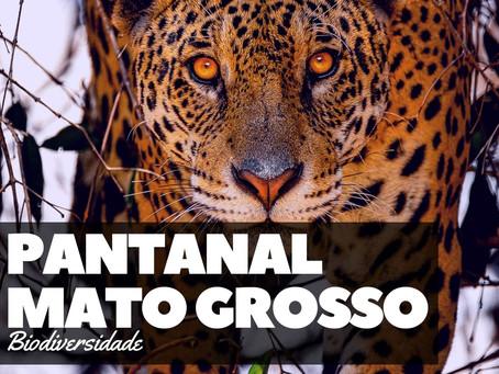 Pantanal - A Joia da Biodiversidade