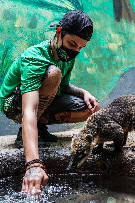 Marcos Azeredo interagindo com Quati no Projeto Selva Viva