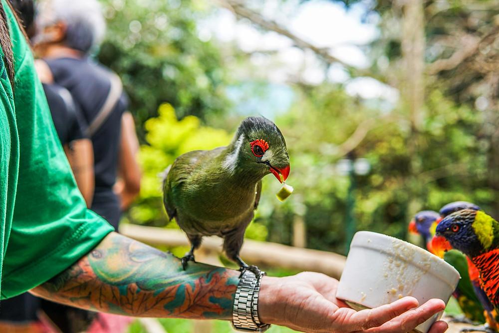 bióloga do projeto selva viva alimenta pássaros,