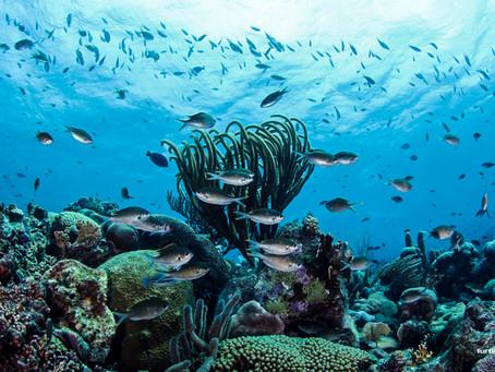 Curaçao: quatro belezas para aproveitar em terra e no mar