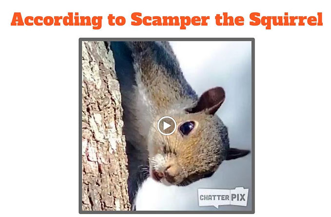 Scamper the squirrel.JPG