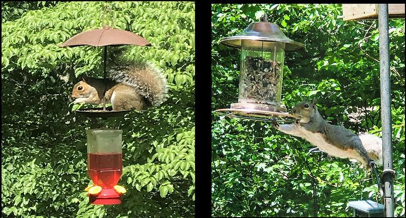 Squirrel photos.JPG