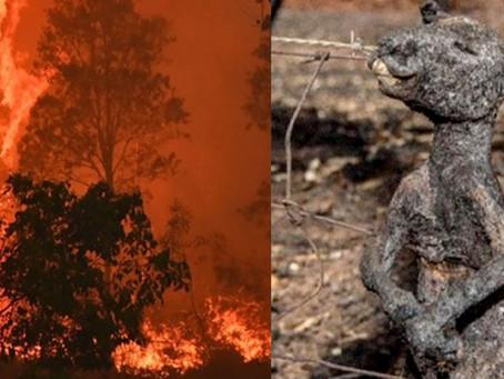 亞馬遜山林大火、澳洲新南威爾斯州發生叢林火災給人類們甩了幾巴掌!