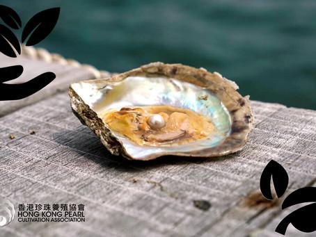珍珠養殖業與可持續發展的關係