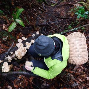 Mushroom Hunting Resources