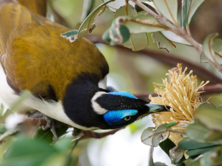Would you like to attract native birds to your garden?