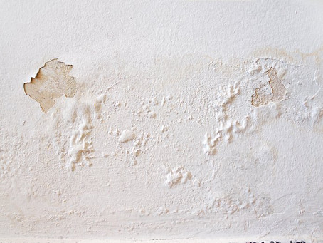 Types of Damp: Penetrating Damp and Mould Growth in Your Home