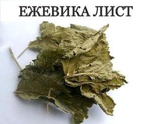 ЕЖЕВИКА ЛИСТ