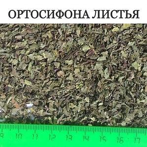 ОРТОСИФОН